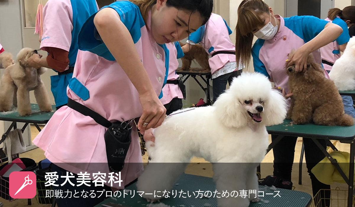 愛犬美容科